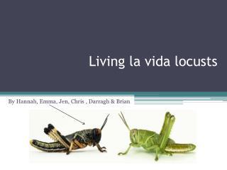 Living la  vida  locusts