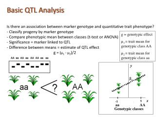 Basic QTL Analysis