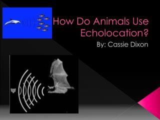 How Do Animals Use Echolocation?