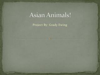 Asian Animals!
