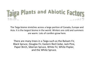 Taiga Plants and Abiotic Factors