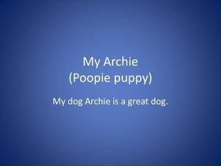My Archie ( Poopie  puppy)