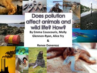 Does pollution affect animals and wild life? How?