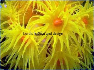 Corals habitat and design