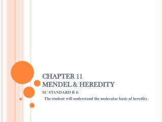 CHAPTER 11 MENDEL & HEREDITY