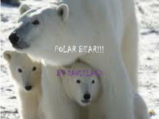 POLAR BEAR!!!