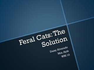 Feral Cats:  The Solution