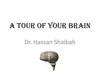 A Tour Of your Brain