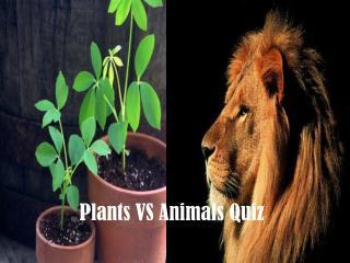 Plants VS Animals Quiz