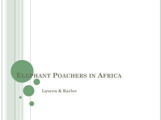 Elephant Poachers in Africa