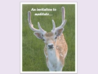 An invitation to meditate…