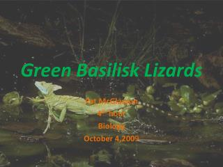 Green Basilisk Lizards