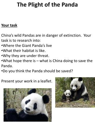 Your task China's wild Pandas are in danger of extinction.  Your task is to research into: