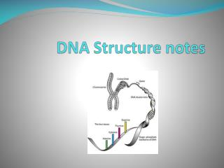 DNA Structure notes