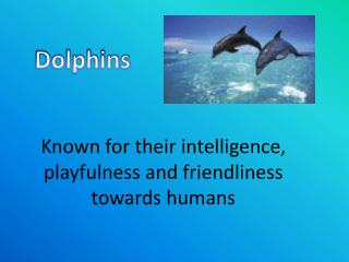 Known for their intelligence, playfulness and friendliness towards humans