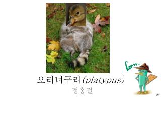 오리너구리 ( platypus)