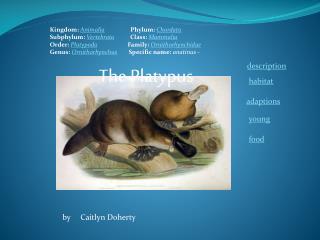 Kingdom:  Animalia Phylum:  Chordata Subphylum:  Vertebrata Class:  Mammalia