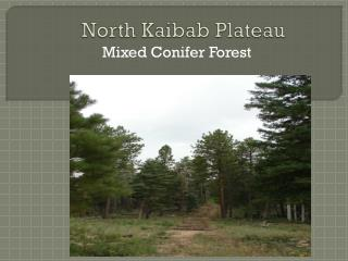 North Kaibab Plateau