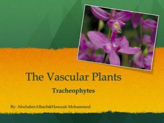 The Vascular Plants