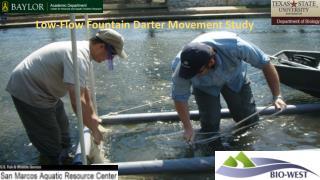 Low-Flow Fountain Darter Movement Study