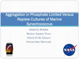 Aggregation in Phosphate Limited Versus Replete Cultures of Marine  Synechococcus