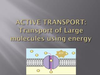ACTIVE TRANSPORT: Transport of Large molecules using energy