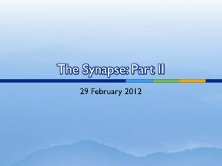 The Synapse: Part II