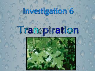Investigation 6 T r a n s p i r a t i o n