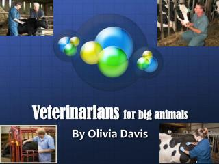Veterinarians  for big animals