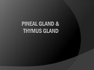 PINEAL GLAND &  THYMUS GLAND