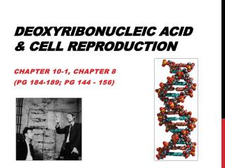 Deoxyribonucleic Acid &  Cell  Reproduction