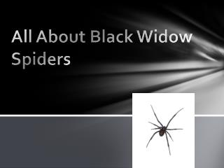 All About Black Widow Spiders