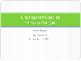 Endangered Species *African Penguin