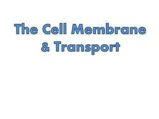 The Cell Membrane  & Transport