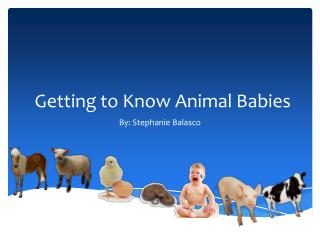 Getting to Know Animal Babies
