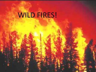 WILD FIRES!