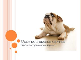 Ugly dog rescue center