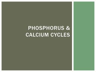 Phosphorus & Calcium cycles