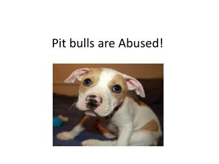 Pit bulls are Abused!