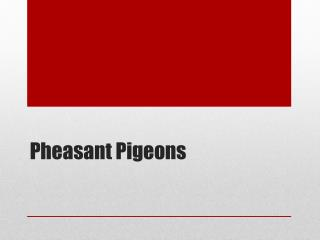 Pheasant Pigeons
