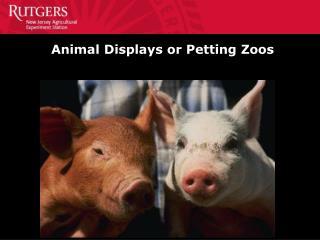 Animal Displays or Petting Zoos