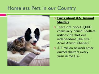 Homeless Pets in our Country