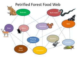 Petrified Forest Food Web