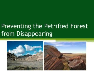 Preventing the Petrified Forest from Disappearing