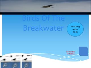 Birds Of The Breakwater