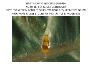 Carpet beetle larvae  damaging a specimen of  Sceliphron destillatorius