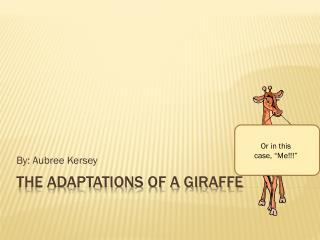 The Adaptations of a Giraffe