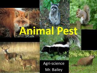 Animal Pest