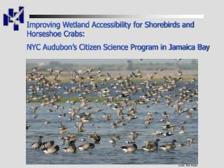 Improving Wetland Accessibility for Shorebirds and Horseshoe Crabs: