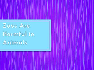 Zoos Are Harmful to Animals